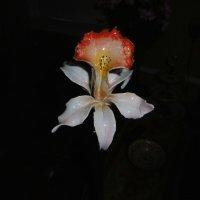 Искусственный цветок :: татьяна