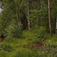 Затерялась речка в травах :: Владимир Макаров