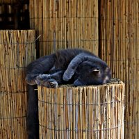 абстрагированный кот :: Александр Корчемный