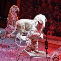И тигры у ног ... сели ! :: Юрий Ефимов