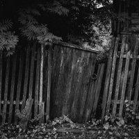 Старенький забор :: Елена Яшнева