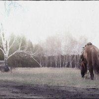 Конь на поляне. :: Марина Влади-на
