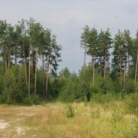 лес :: Юрий Бичеров