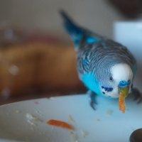 что не съели, то я съем! :: Дмитрий Барабанщиков