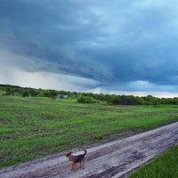 Зарисовки дачные. Куды пойти, куды податься, а может от дождя пора смываться... :: Александр Резуненко
