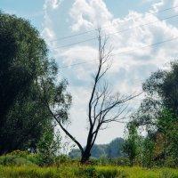 Сухое дерево :: Света Кондрашова