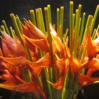 Цветы-Стрелеция (Вена) :: татьяна