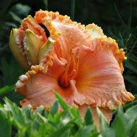 Цветок :: Михаил Цегалко