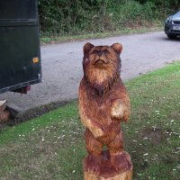 Медведь :: Natalia Harries
