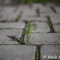 Растение которое стремится к жизни :: Эммль Buturlin