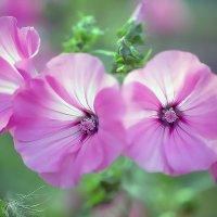 цветы :: елена славинскене