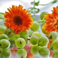 Крыжовник - это ягода из детства :: galina tihonova