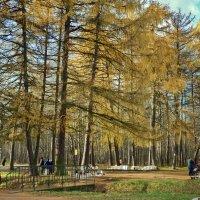 Осень в Кусково :: Владимир Брагилевский