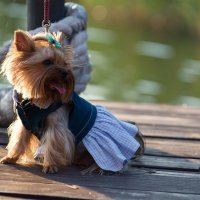 Fashion dogs :: Ivan teamen