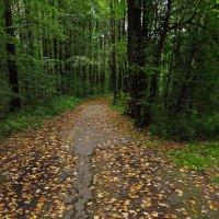 Знаем мы, куда эта дорога :: Андрей Лукьянов