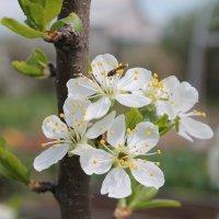 Весна-красна :: Анастасия Яковлева