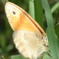 бабочка :: Марина Титкова
