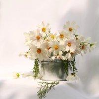 Лето бывает белым! :: Наталья Казанцева