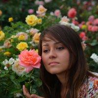 Розы :: М. Дерксен Derksen