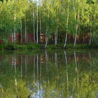 На пруду.. :: Сергей Куликов