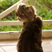кот в ошейнике :: Алексей Совалев