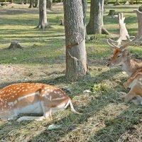 Благородное семейство отдыхает... :: Vladimir Semenchukov
