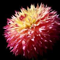 Цветная папаха :: Alexander Andronik