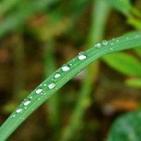 Хрусталики дождя :: Валентина Папилова