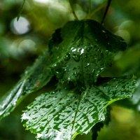 вторые сутки хлещет дождь ... :: Маry ...