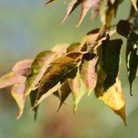 Краски приближающейся осени. :: Paparazzi