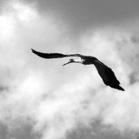 """""""Птица гордая..где-то там в вышине одинок твой полет"""" :: Инна Малявина"""