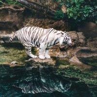 Кошки боятся воды? :: Илья Ткачев