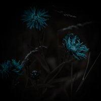 Цветочки :: Val Савин
