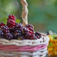 Дары уходящего лета :: Светлана Моисеева