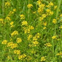 полевые цветы :: Марина Титкова