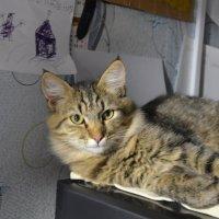 Взгляд серьезного кота :: Андрей Козинец