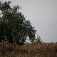 летний вечер :: павел бритшев