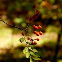 в лесу :: Александр Прокудин