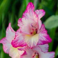 Цветок :: Eugen Pracht