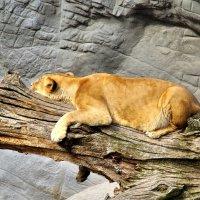 Гамбургский зоопарк :: Денис Кораблёв