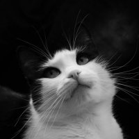 Мечтательный кот :: Avada Kedavra!