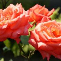 """""""Пойдемте в сад, я покажу вас розам"""" :: Наталия Скрипка"""