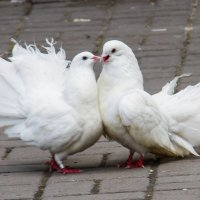 Это Любовь! :: Дмитрий Сиялов