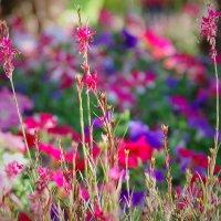 Цветочки :: Лариса Журавлева