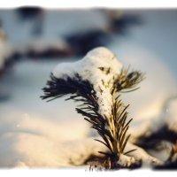 Зима :: Юрий Фёдоров