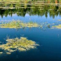 Мертвое озеро :: Дмитрий Конев