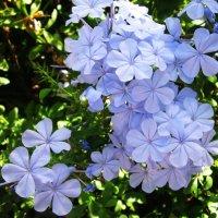 Цветы-бантики :: татьяна