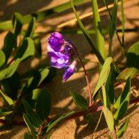 пляжные цветочки :: linnud
