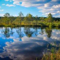Истинное убежище для отдыха, открытое для всех людей, есть и будет природа :: Татьяна Ковалькова