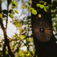 Утро в лесу :: Marion
